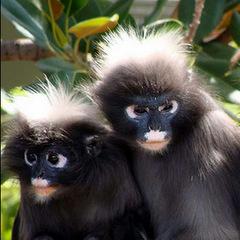 primate rescue