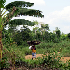Ghana countryside