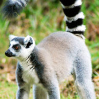 Madagascar wildlife