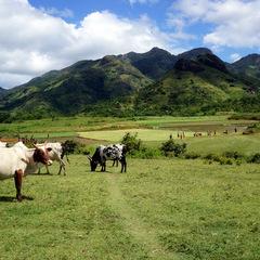 Madagascar countryside and animals
