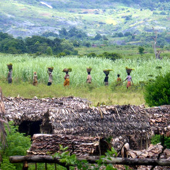 Madagascar locals carring wood