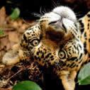 Caribbean Wildlife