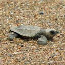 Turtle and Wildlife Conservation