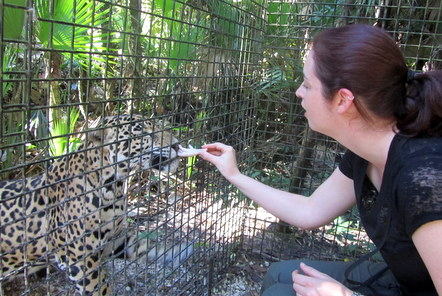 My time at the Caribbean Wildlife project in Belize