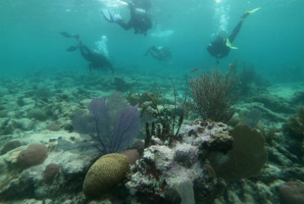 Reef Conservation in Belize