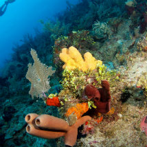 Why does sunscreen and sun cream damage coral reefs?