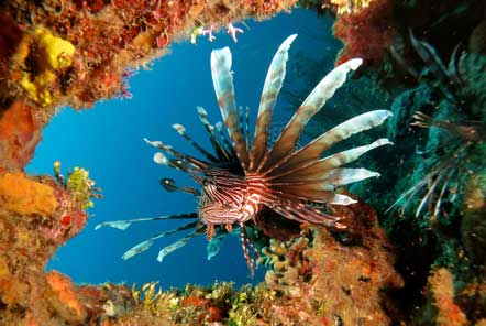 World Environment Day - Lionfish are invading!