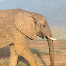2021 - The year of the new African elephant