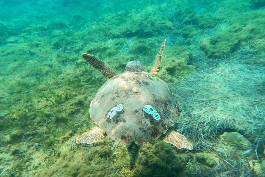 Greek island update - 100 turtle nests and counting!