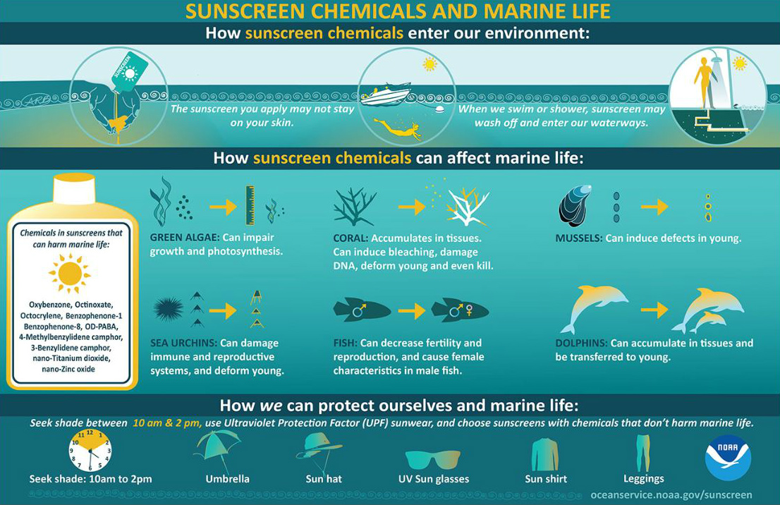 Sunscreen infographic