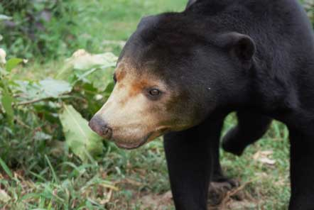 Lucy's experience at the Bear Rescue project in Cambodia