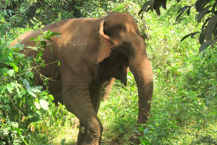 My time at the Elephant Conservation project in Cambodia