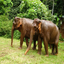 Lucy's experience at the Elephant Conservation project in Cambodia