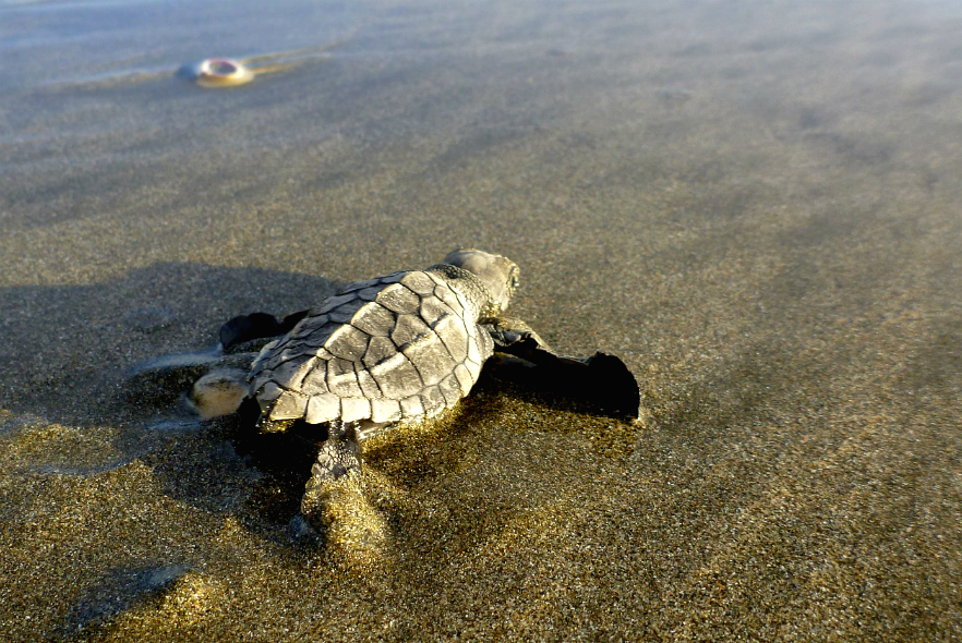 Poem for the plight of the turtles