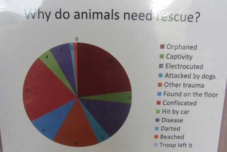 Why animals need rescue