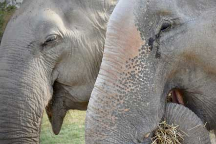 Two newly rescued elephants are reunited