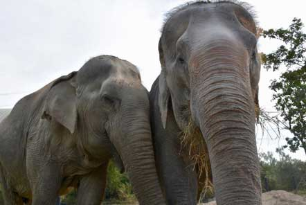 Elephant friends are reunited