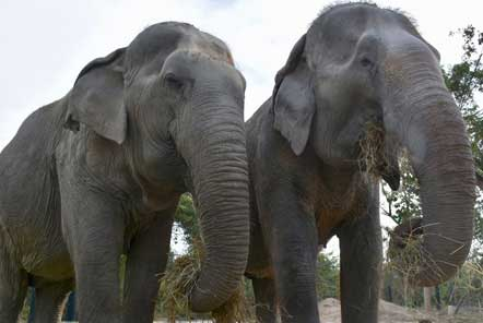 A happy ending at the Elephant Care centre