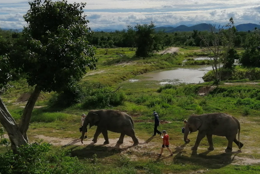 Complete your DofE Gold Award with elephants in Thailand!
