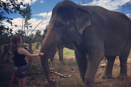 Volunteer with elephant