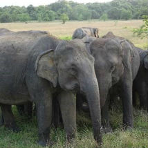 Reducing human-elephant conflict - using an Elephant-friendly bus!