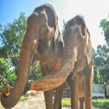 Elephants, elephants and more elephants!