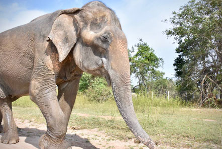 Malai Gun at the Elephant Care project in Thailand