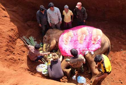 Traditional elephant burial