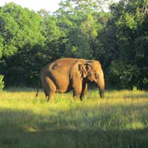 Pod Charity Grant to the Elephant Conservation project