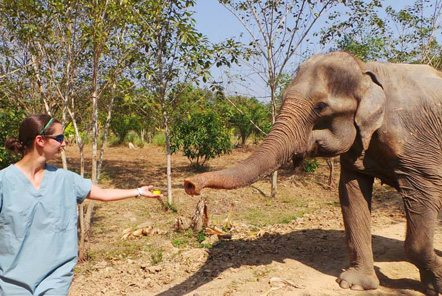 Elephant Care in Thailand