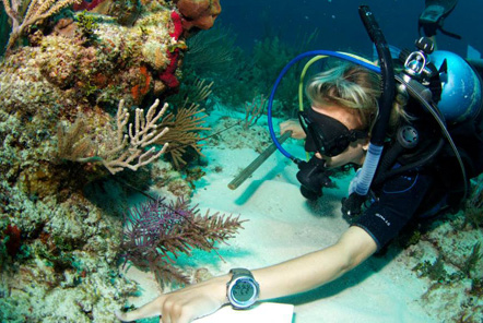 Reef Conservation in Belize