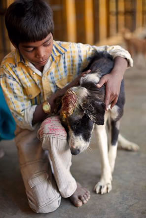 India Animal Rescue