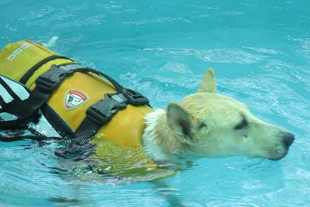 Paralysed dog in hydrotherapy pool