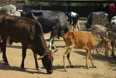 Lucy's experience at the Animal Rescue project in India