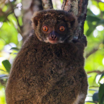 Lemurs, turtle rescue & lobsters – Josh's tales from Madagascar