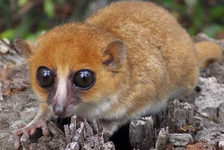 Update from our Lemur research team in Madagascar