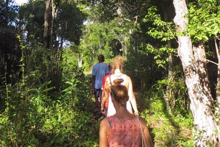 Madagascar Conservation