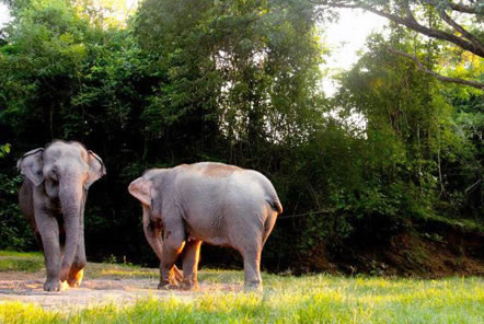 Meet the elephants in Thailand