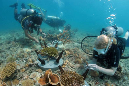 Diving to look at coral reef in Thailand