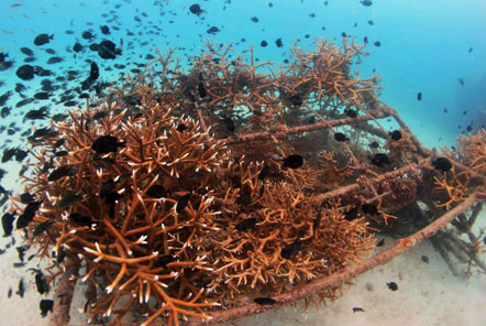 A successful artificial reef