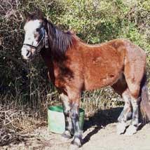 Mteta's Story of Rescue and Rehabilitation