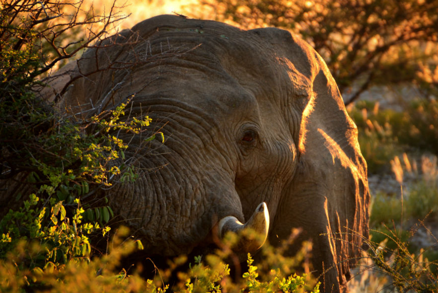 What is happening during lockdown at the Desert Elephant Conservation project in Namibia!