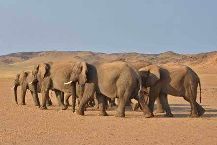 New elephant volunteer project in Africa!