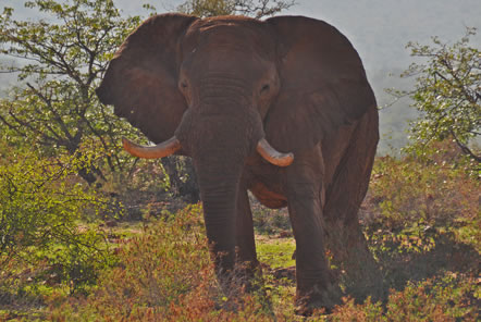 Update from volunteers at our Desert Elephant Conservation project