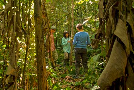 Research in the amazon jungle