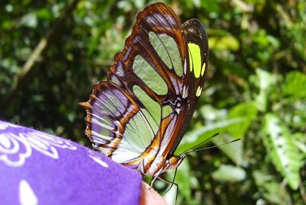 Peru Amazon Conservation