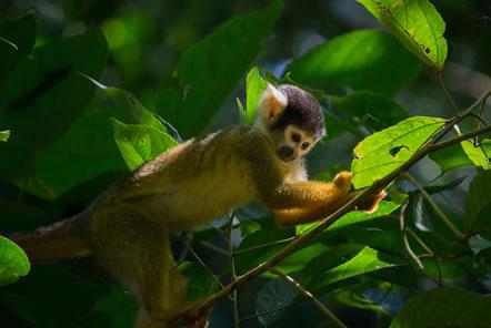 Amazon Conservation in Peru
