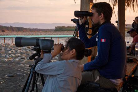Volunteers watching parrots with binoculars