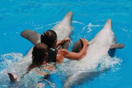 Swimming with captive dolphins