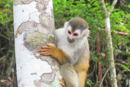 Rope bridges helping to save monkeys